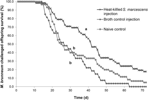Survival curves for offspring of the S. marcescens treatment.Percentages of male and female (merged) offspring treated with M. brunneum surviving over time whose mothers were challenged with either S. marcescens or a control treatment (naive control or broth control). Different letters signify significant differences in survival curves between treatments (risk ratios, p ≤ 0.0167).