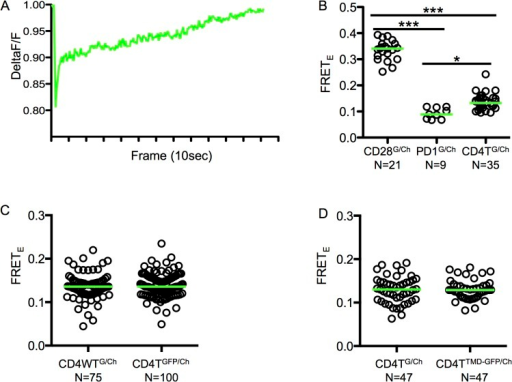 Mutating the CD4 TMD GGxxG motif does not impair dimerization upon TCR engagement.(A) Mobility of lipid bilayers was assessed by measuring recovery of streptavidin-PE molecules into a bleached region of the lipid bilayer and normalized to a reference region that was not bleached. (B) FRETE values for CD28GFP/Ch, PD1GFP/Ch and CD4TGFP/Ch cells imaged by TIRFM on mobile bilayers containing agonist pMHC (MCC-Ek). Data are representative of those obtained with two independently generated cell lines. (C) FRETE values for CD4WTGFP/Ch vs. CD4TGFP/Ch cells imaged by TIRFM on mobile bilayers containing agonist pMHC (MCC-Ek). Data is concatenated from two independently generated cell lines as in Fig 4D. (D) FRETE values for CD4TGFP/Ch vs. CD4TTMD-GFP/Ch cells imaged by TIRFM on mobile bilayers containing agonist pMHC (MCC-Ek). Data are representative of those obtained with two independently generated cell lines. Analysis was performed as for Fig 4. Dots represent single cells and green bars represent median values (*p<0.05, **p<0.001; ***p<0.0001; Mann-Whitney).