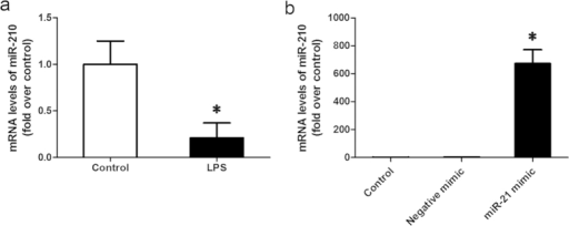 mRNA levels of miR-210 in chondrocytes.(a) MiR-210 mRNA level in chondrocytes with LPS/PBS treatment; (b) MiR-210 mRNA level in chondrocytes transfected with negative mimic or miR-210 mimic. Data are shown as mean ± SD of three experimental replicates. *P < 0.05 vs. control group.