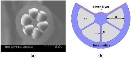 (a) Cross-section of the commercial grapefruit fiber; (b) Schematic of the designed EC-GF-based SPR sensor.