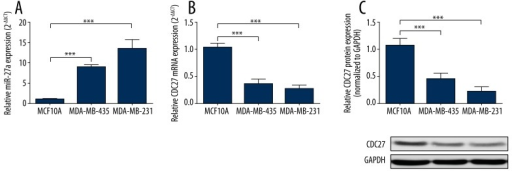 MiR-27a is significantly increased and CDC27 expression is significantly decreased in TNBC cells. (A) qRT-PCR analysis of miR-27a expression in MDA-MB-435, MDA-MB-231, and MCF10A cell lines. (B) qRT-PCR analysis of CDC27 mRNA expression in MDA-MB-435, MDA-MB-231, and MCF10A cell lines. (C) Western blot analysis of CDC27 expression in MDA-MB-435, MDA-MB-231, and MCF10A cell lines. Data are shown as mean±S.D by 3 independent experiments. * P<0.05, ** P<0.01, *** P<0.001.
