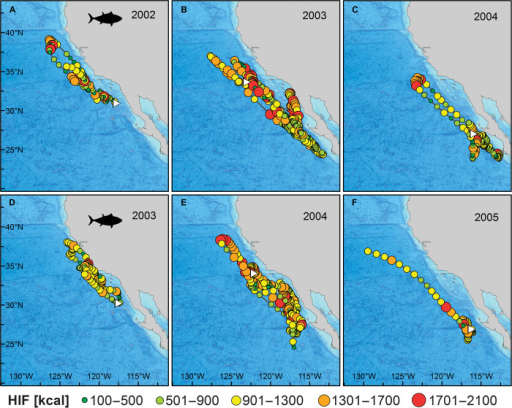 Tracks with estimated HIF (kcal day−1) for two archival tagged bluefin tuna.Tracks are broken into yearly sections, and the first point in each panel is marked with a white triangle. (A to C) HIF track for archival tag 1002020, deployed in August 2002. White triangles correspond to 28 August 2002 (A), 1 January 2003 (B), and 1 January 2004 (C). (D to F) HIF track for archival tag 1003088, deployed in July 2003. White triangles correspond to 7 August 2003 (D), 1 January 2004 (E), and 1 January 2005 (F).