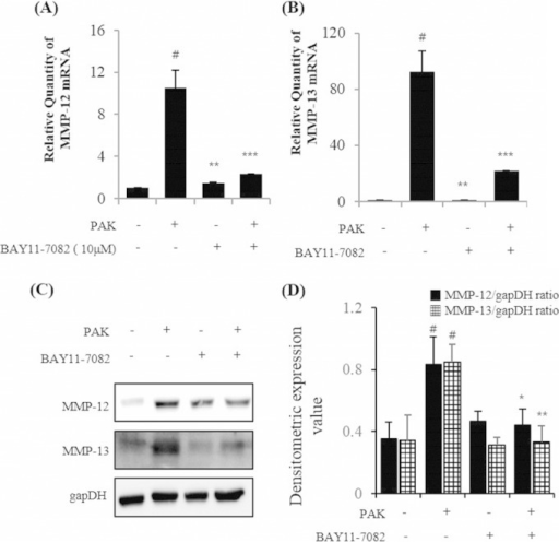 BAY-11-7082 inhibited MMP-12 and MMP-13 expression in P. aeruginosa strain K (PAK)-infected H292 cells. (A and B) MMP-12 (A) and MMP-13 (B) mRNA expression was determined via real-time PCR. (C and D) MMP-12 and MMP-13 protein expression was quantified using GAPDH as an internal control. #, significantly different from normal control group; *, P < 0.05; **, P < 0.01; ***, P < 0.001.