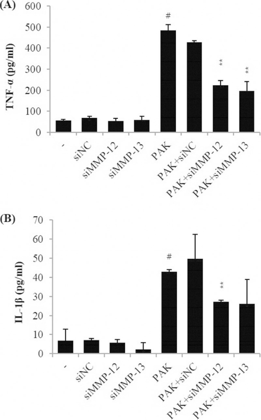Proinflammatory cytokine expression in MMP-12 and MMP-13 siRNA-transfected H292 cells after P. aeruginosa strain K (PAK) infection. TNF-α (A) and IL-1β (B) protein levels were assessed by qRT-PCR and ELISA, respectively. Bars indicate the mean ± standard deviation from three independent experiments performed in duplicate. −, normal control H292 cells treated with PBS only; siNC, H292 cells treated with control siRNA; siMMP-12, H292 cells treated with MMP-12 siRNA only; siMMP-13, H292 cells treated with MMP-13 siRNA only; PAK + siNC, H292 cells treated with control siRNA plus strain K (MOI of 200); PAK + siMMP-12, H292 cells treated with MMP-12 siRNA plus strain K (MOI of 200); PAK + siMMP-13, H292 cells treated with MMP-13 siRNA plus strain K (MOI of 200). #, significantly different from normal control group; **, P < 0.01.