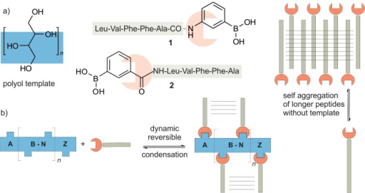 a) Peptide boronic acids 1 and 2 are schematically show | Open-i on