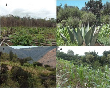 Agroforestry System in México. 1) Long fallow agroforestry; 2) Terrace agroforestry; 3) Semiarid agroforestry; 4) Agroforest and milpa