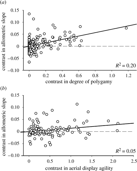 Phylogenetically independent contrasts analysis of allometry for sexual size dimorphism versus (a) degree of polygamy, y=0.071x, p<0.0001 (with outlier removed: y=0.073x, p<0.0001, R2=0.17) and (b) aerial display agility, y=0.014x, p=0.001. Contrasts in allometric slopes were calculated on log-transformed values.