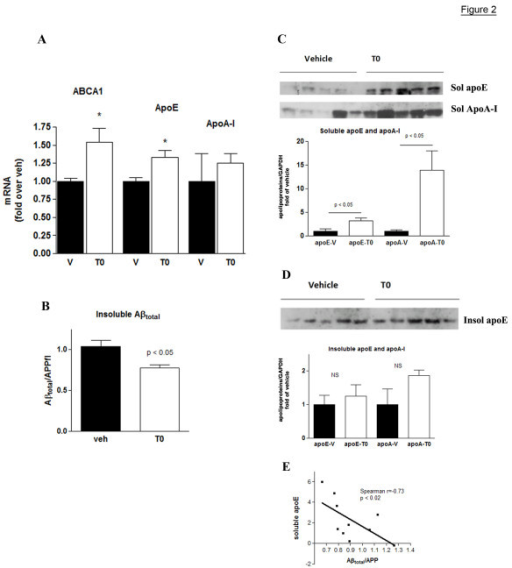 Extended T0 treatment increases the levels of soluble apoE and apoA-I proteins and decreases insoluble Aβ in APP23 mice. APP23 mice (n = 5) were treated by gastric gavage with T0 for 4 weeks at a dose of 20 mg/kg/day and age-matched control mice (n = 5) received vehicle. At the end of the treatment one hemisphere was used for total RNA isolation and the other was used for protein extraction. Soluble brain proteins were extracted with DEA followed by the extraction of the insoluble proteins from the pellet using formic acid. A: Expression level of ABCA1, apoE and apoA-I mRNA as determined by RT-QPCR. B: Insoluble Aβtotal in aliquots from the insoluble brain fraction was determined by WB using by 6E10 antibody which recognizes both Aβ40 and Aβ42. The level of Aβtotal was normalized to the level of APP full length (APPfl). C: Amounts of soluble apoE and apoA-I were determined by WB of formic acid extracted brain homogenates. The bands were quantified and the level of apoE normalized to the level of GAPDH. D: Insoluble apoE and apoA-I were determined by WB of formic acid extracted brain homogenate as in C. Values (A, B, C and D) are means ± SEM and represent fold of vehicle (two-tailed Student's t test). E. The level of insoluble Aβtotal correlates negatively to the level of soluble apoE (Spearman Nonparametric correlation analysis).