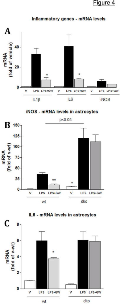 LXR agonists down-regulate expression of pro-inflammatory genes in microglia and astrocytes. Microglial cell line BV2 and astrocytes established from wild type (wt) and LXRdko (dko) mice were pre-treated with LXR ligand GW or vehicle for 18 h prior to LPS treatment (50 ng/ml). Control cells received vehicle only (veh). For GW treated cells (LPS+GW) the ligand was co-applied with LPS. Cells were harvested 24 hours after LPS administration and the mRNA expression measured by RT-QPCR. A: BV-2 cells. Values are fold of vehicle. *, p < 0.05 LPS+GW treated compared to LPS only treated cells. B and C: WT and dko astrocytes were treated with LPS and GW as in A and mRNA expression of iNOS (B) and IL-6 (C) measured by RT-QPCR. Values (means ± SEM) are fold of wild type, vehicle treated cells of at least two independent experiments. Note that unlike in WT cells, GW does not decrease the expression of iNOS and IL-6 in dko cells. (LPS+GW in dko versus LPS+GW in WT, p < 0.01). For all experiments, LXR ligands were applied at 5 μM concentration. Statistics were performed by two-tailed Student's t test.
