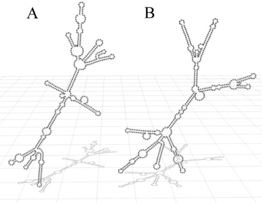 Secondary structure of the wild type scR1 and the watermarked scR1. The secondary structure predictions were performed using the ViennaRNA-1.5 web interface. The 3D model was created using Blender. A: wild type scR1 of Saccharomyces cerevisiae; B: watermarked scR1 (see section methods)