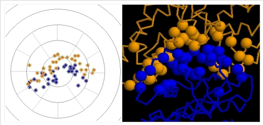The illustration of protein complex 1BKD. The left picture shows theresult of above steps.