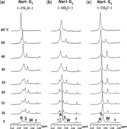 Dynamic 19F-NMR spectra of fully paired 16-mer NarI duplexes. FAAF modification at (a) G1, (b) G2 and (c) G3. *unknown conformers; #impurity.