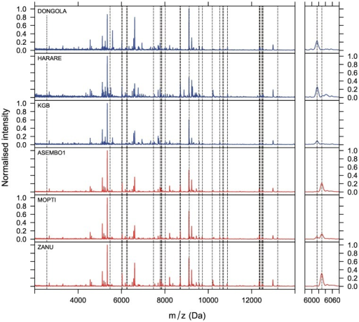 Examples of MALDI-TOF MS spectra for Anopheles gambiae sensu stricto and A. arabiensis.Examples of representative MALDI-TOF MS spectra measured from 3 A. arabiensis (blue) and 3 A. gambiae s.s. (red) colonies. The spectra were taken from crude suspensions of heads and thoraces in SA solution. The vertical, dashed lines indicate peaks that are characteristic (but not exclusive) for one or the other species. The left panels show the whole spectra between 2 and 14 kDa, while the right panels zoom into two peaks. The two peaks are separated by only a few Daltons. While the left peak is more common in A. arabiensis, the right peak is more common in A. gambiae s.s. In this representation the peak intensities were normalised against the highest intensity measured in each spectrum.