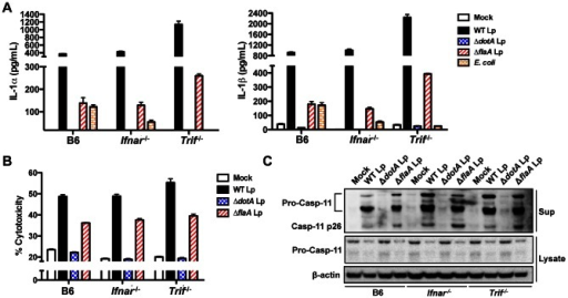 Non-canonical inflammasome responses to L.pneumophila occur independently of TRIF and IFNAR.(A) Unprimed B6, Ifnar−/−, or Trif−/− BMDMs were infected with WT L. pneumophila (WT Lp), ΔdotA Lp, ΔflaA Lp, E. coli, or PBS (mock infection) for 16 hours. Levels of IL-1α and IL-1β in the supernatants were measured by ELISA. (B) Unprimed B6, Ifnar−/−, or Trif−/− BMDMs were infected with WT Lp, ΔdotA Lp, ΔflaA Lp, or PBS (mock infection) for 16 hours. Cell death (% cytotoxicity) was measured by LDH release into the supernatants relative to Triton X-100-lysed cells. Graphs show the mean ± SEM of triplicate wells. (C) B6, Ifnar−/−, or Trif−/− BMDMs were primed with 0.4 µg/mL Pam3CSK4 for 4 hours and infected with WT Lp, ΔdotA Lp, ΔflaA Lp, or PBS for 16 hours. Levels of full-length caspase-11 (pro-casp-11) and processed caspase-11 (casp11 p26) in the supernatants and pro-casp-11 and β-actin (loading control) in the cell lysates were determined by immunoblot analysis. Data are representative of two independent experiments.