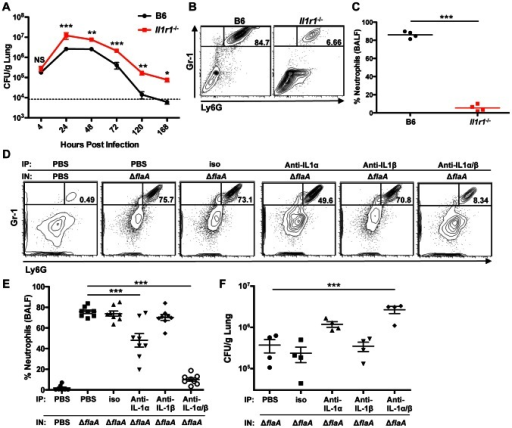 IL-1α and IL-1β control bacterial burden and neutrophil recruitment in vivo.(A) 8–12 week old B6 or Il1r1−/− mice were infected with 1×106 ΔflaA L. pneumophila intranasally (IN). Lungs were plated to quantify CFU per gram. Graph shows the mean ± SEM of three or four infected mice per group. Dashed line represents the limit of detection. (B and C) B6 or Il1r1−/− mice were infected with 1×106 ΔflaA Lp IN. 24 hours post-infection, bronchoalveolar lavage fluid (BALF) was collected and the percentage of neutrophils in the BALF was quantified by flow cytometry. Percentages are reported as the frequency of live cells in the BALF. (B) Representative flow cytometry plots showing the percentage of Gr-1+Ly6G+ neutrophils. (C) Graph showing the percentage of neutrophils. Each point represents an individual mouse and lines indicate the mean of 4 mice per group. (D, E, and F) B6 mice were injected intraperitoneally (IP) with either PBS, 100 µg isotype control antibody (iso), 100 µg anti-IL-1α antibody, 100 µg anti-IL-1β antibody, or 100 µg each of anti-IL-1α and anti-IL-1β (anti-IL-1α/β) 16 hours before infection. The mice were then intranasally infected with either 1×106 ΔflaA Lp or mock infected with PBS. (D and E) 24 hours post-infection, BALF was collected and flow cytometry was performed to quantify the percentage of neutrophils. (D) Representative flow cytometry plots showing the percentage of Gr-1+Ly6G+ neutrophils. (E) Graph showing the percentage of neutrophils. Each point represents an individual mouse, lines indicate the mean of 8 mice per group, and error bars represent SEM. Shown are the pooled results of two independent experiments. (F) 72 hours post-infection, the lungs were plated to quantify CFU per gram. Each point represents an individual mouse. Line indicates the mean of 4 infected mice per group with error bars representing SEM. *** is p<0.001 by one-way ANOVA with Tukey post-test or unpaired t-test (C). **is p<0.01 and *is p<0.05 by unpaired t-test. NS is not significant.