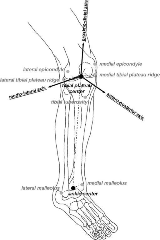 Anatomical Axes Diagram Enthusiast Wiring Diagrams