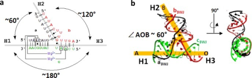 Structural features of the pRNA 3WJ motif. (A) Secondary structure of 3WJ motif with base pairs annotated using Leontis–Westhof nomenclature (25). (B) Tertiary structure of 3WJ motif with indication of ∠AOB ∼ 60° angle formed between H1 and H2. Angle corresponds to inner angles of polygons.