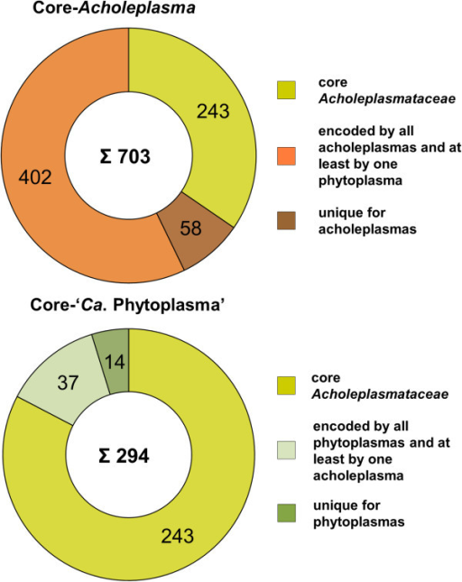 Composition of theAcholeplasmaand 'Ca. Phytoplasma' core-genomes as predicted by PanOCT. The total number of proteins inferred from the respective core genome is given in the middle (uncoloured part).