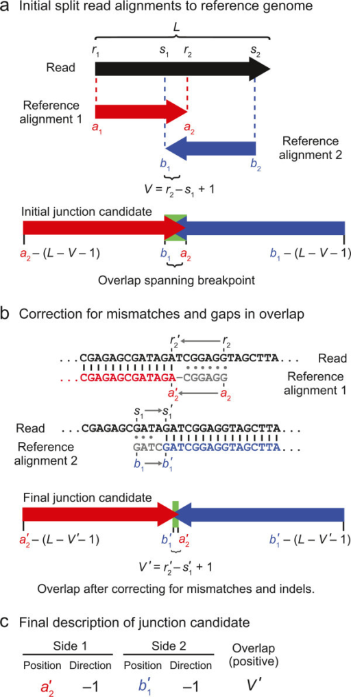 Junction candidate creation from split-read alignments that overlap. a) If two alignments of a read to the reference genome overlap, the overlapping bases at the center of the read could potentially be assigned to two separate locations in the reference sequence. b) If the read alignments in (a) had the imperfect alignments pictured here, the coordinates of each match and their overlap would be corrected as pictured by removing overlap until the remainder is a perfect match with no indels or mismatched bases. c) This type of junction candidate can be fully described by the reference coordinates defining each side of the junction breakpoint, the directions in the reference sequence each junction side continues to match from those breakpoint positions, and the number of overlapping bases in the read alignments.