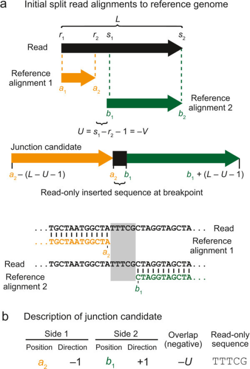 "Junction candidate creation from split-read alignments that do not overlap. a) If two alignments of a read to the reference genome do not meet or overlap in the middle of the read, then there are unique ""read-only"" bases present between the two matches to the reference sequence that do not match either side. b) This type of junction candidate can be fully described by the reference coordinates on each side of the junction breakpoint, the directions in the reference sequence each junction side continues to match from those positions, and the identity of the read-only bases inserted at the junction breakpoint."