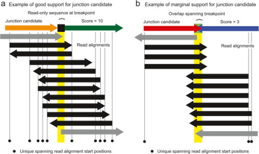 "Example of assigning coverage evenness scores to candidate junctions. Reads that align to a candidate new junction sequence may start at many different positions relative to the breakpoint. Reads that do not unambiguously support the new junction (gray arrows) because they do not extend across the breakpoint and any overlap or read-only bases (yellow highlighting) are not counted toward the evenness score. Although the two examples have the same number of reads that support the new junction because they align across the breakpoint and match the junction better than the reference genome (black arrows), the example in (a) is well-supported because these reads start in many different registers with respect to the breakpoint as would be expected for a normal reference genome location, whereas the example in (b) has reads beginning at a small number of biased positions with respect to the junction. This coverage evenness score is used to calculate a skew p-value to accept or reject a candidate junction, after also accounting for differences in the maximum number of read start positions that can support each candidate junction. In cases of tandem duplications much shorter than the read length, reads must also extend several ""continuation"" bases past any unique-only or overlap sequence to count as supporting a junction, as illustrated in Figure 5."
