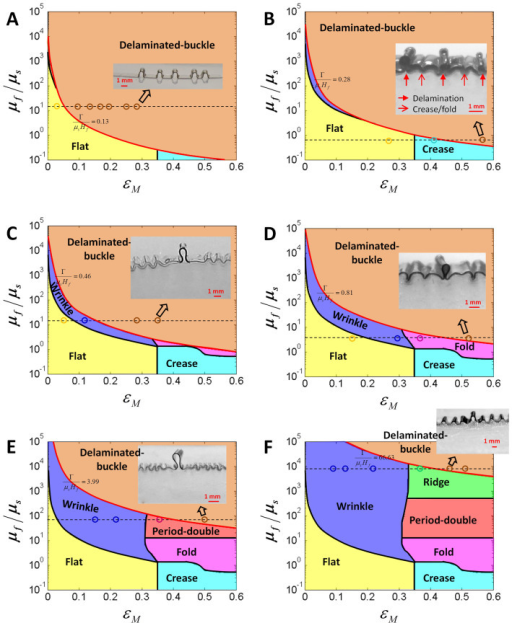 Experimental validation of the phase diagram for instability patterns in film-substrate structures with moderate adhesion energies.Comparison between experimental data and the phase diagrams of surface instability patterns with delamination: (A) flat to delaminated-buckle, (B) crease to delaminated-buckle, (C) wrinkle to delaminated-buckle, (D) fold to delaminated-buckle, (E) period-double to delaminated-buckle, and (F) ridge to delaminated-buckle. The circle markers with different colors in each phase domain represent the observed instability patterns. The inset images in each phase diagram represent the corresponding delaminated-buckle patterns. The two-dimensional phase diagrams are achieved by sectioning the three-dimensional phase diagram at the normalized adhesion energies Γ/(μsHf) equal to (A) 0.13, (B) 0.28, (C) 0.46, (D) 0.81, (E) 3.99 and (F) 66.63, respectively.