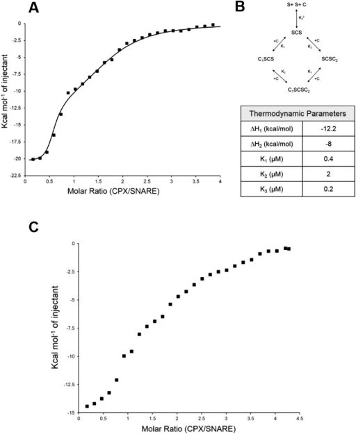 Isothermal titration calorimetry indicates multivalent interactions between SNAREΔ60 and CPX.(A) Calorimetric titration of super-clamp complexin (scCPX; residues 1–134, with D27L, E34F, R37A mutations) into pre-fusion SNAREΔ60 complex describes a multi-site interaction of CPX. The solid lines represent the predicted binding thermogram assuming that both scCPX and truncated SNAREΔ60 are bivalent with well-defined independent thermodynamic parameters describing CPX central helix and CPX accessory helix binding (B). (C) Representative thermogram of full-length wild-type CPX (residues 1–134) titrated into unblocked SNAREΔ60.DOI:http://dx.doi.org/10.7554/eLife.04463.006