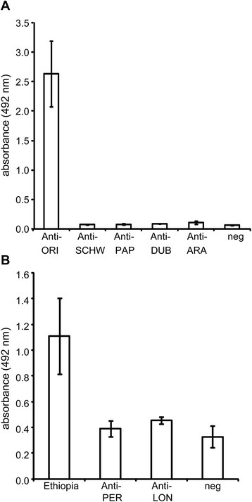 Specificity of the anti-sand fly saliva IgG antibody response. The reactivity of Phlebotomus orientalis salivary gland homogenates (SGH) with sera from mice (a) and dogs (b) repeatedly exposed to a single sand fly species was measured via ELISA. In graph A, SGH was incubated with sera from mice exposed to P. orientalis (Anti-ORI), Sergentomyia schwetzi (Anti-SCHW), P. papatasi (Anti-PAP), P. duboscqi (Anti-DUB), or P. arabicus (Anti-ARA). Each bar represents the mean for two serum samples ± the standard error. The values for the positive controls (the sera of mice incubated with homologous antigen) were as follows: S. schwetzi = 1.48 ± 0.43, P. papatasi = 2.38 ± 0.32, P. duboscqi = 2.87 ± 0.60, and P. arabicus = 1.86 ± 0.24. In graph B, the SGH was incubated with the sera from dogs exposed to P. perniciosus (Anti-PER) or Lutzomyia longipalpis (Anti-LON). Seropositive Ethiopian dogs (Ethiopia) and dogs that had never been exposed to sand flies (neg) were used as positive and negative controls, respectively. Each bar represents the mean of five serum samples ± the standard error. The absorbencies of the sera incubated with the homologous antigen were 2.42 ± 0.06 for L. longipalpis and 1.73 ± 0.13 for P. perniciosus
