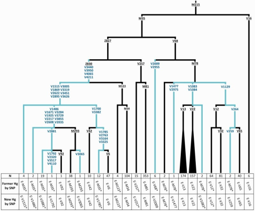 —Molecular dissection of haplogroup E-M35. All the 62 mutations shown have been genotyped. New mutations and branches are in blue. Previously known mutations are underlined. At the bottom of each branch are reported: The number of samples carrying the haplogroup, the former mutation-based nomenclature (according to Trombetta et al. [2011]), and the new mutation-based nomenclature. Chromosomes E-V1785* are ancestral for V1472, V1617, V2793, V2684, V2727, V2802, and V2927 (not shown).