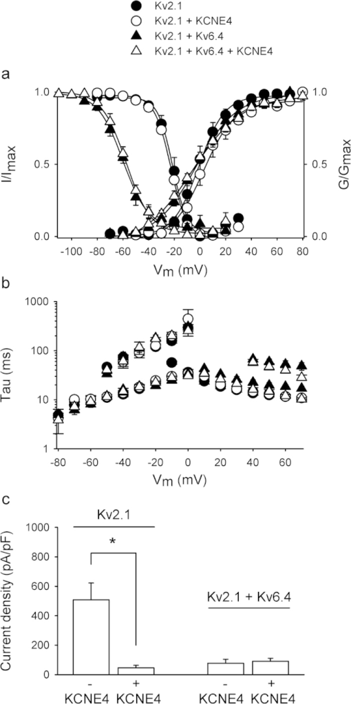 KCNE4 modulates both Kv2.1 homotetramers and Kv2.1/Kv6.4 heterotetramers.(A) Voltage-dependence of activation and inactivation of Kv2.1 and Kv2.1/Kv6.4 in the absence or presence of KCNE4. The activation curve was determined by plotting the normalized tail currents at −35 mV as a function of the prepulse potential and the inactivation curve was determined by plotting the normalized current amplitude at +60 mV as a function of the 5-s prepulse potential. Solid lines represent the Boltzmann fit. KCNE4 (open symbols) did not modulate Kv2.1 (circles) or Kv2.1/Kv6.4 (triangles) voltage-dependence of activation and inactivation. (B) Activation and deactivation kinetics of Kv2.1 and Kv2.1/Kv6.4 in the absence or presence of KCNE4 derived from a single or double exponential fit of the raw current recordings. KCNE4 did not affect Kv2.1 activation or deactivation kinetics significantly whereas it slightly fastened Kv2.1/Kv6.4 activation kinetics at higher potentials. (C) Current densities obtained at 0 mV after co-expression of 250 ng Kv2.1 + 1 μg CFP or 1 μg KCNE4 (1st and 2nd combination, respectively) and 0.5 μg Kv2.1 and 5 μg Kv6.4 + 1 μg CFP or 1 μg KCNE4 (3rd and 4th combination, respectively). Co-expression of KCNE4 reduced Kv2.1 current density significantly (*p < 0.05) while co-expression of KCNE4 with Kv2.1/Kv6.4 had no significant effect.