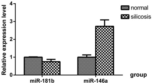 Expression levels of miR-146a and miR-181b in SiO2-treated lungs. miR, microRNA.