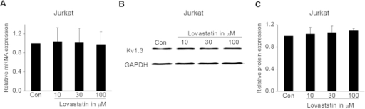 Effect of Lovastatin on Kv1.3 expression in Jurkat cells.(A) Jurkat cells were incubated with 10, 30, and 100 μM Lovastatin for 24 h. Then, the relative Kv1.3 mRNA expression level normalized to GAPDH was measured by real-time PCR. The summarized data from 3 replicates was shown. (B) Representative Western blotting analysis of Kv1.3 protein expression under control and after 24 h treatment with 10, 30, or 100 μM Lovastatin. (C) The summarized data from 3 replicates which were normalized to the protein expression of GAPDH. All the data was expressed as the mean ± SEM.