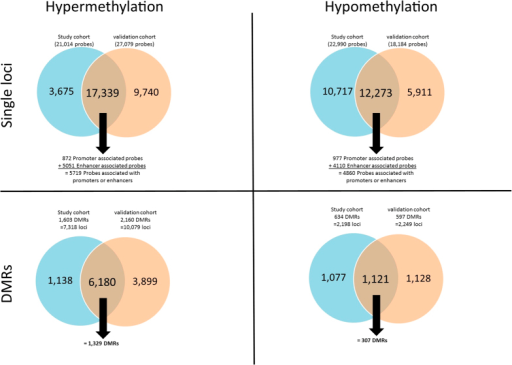 Summary of the DNA methylation comparing primary tumours (IDC) versus matched normal adjacent tissue (NAT) in the study cohort (blue) and the validation cohort (orange).The top two Venn diagrams show hyper- and hypomethylation of single loci, and the bottom two Venn diagrams show hyper- and hypomethylation of differentially methylated regions (DMRs). The number of validated methylation probes is shown in the middle of each Venn diagram. Underneath the validated number of probes, the number of these probes that are located within promoter and enhancer regions is shown (top two Venn diagrams).