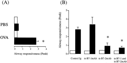 Inhibition of airway hyperresponsiveness to  methacholine by an anti-B7-2  mAb. (A) Mice were immunized  and exposed to either an aerosol  of PBS or OVA for 5 consecutive days. (B) Effect of anti-B7-1  and/or B7-1 mAb on antigeninduced AHR. Control mice  were treated with rat IgG. Results are expressed as the mean ±  SEM of the Penh before (open  bar) and after (  filled bar). MCh  provocation for n = 4–6 animals.  Statistical significance (*) was determined by a Student's t test and  a value of P <0.05 was considered to be significant.