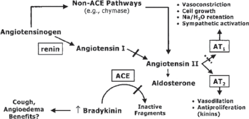 The renin angiotensin aldosterone system. Reproduced with permission from McMurray JJ, Pfeffer MA, Swedberg K, et al. 2004. Which inhibitor of the renin-angiotensin system should be used in chronic heart failure and acute myocardial infarction? Circulation, 110:3281–8. Copyright © 2004. Massachusetts Medical Society. All rights reserved.