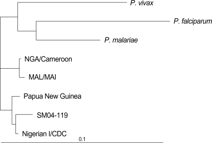 Phylogenetic tree based on the small subunit ribosomal RNA genes of Plasmodium species including four registered P. ovale isolates (Nigerian I/CDC, Papua New Guinea, MAL/MAI, and CAG/Cameroon.) and P. ovale isolate (SM04-119, DQ104413) of this study. SM04-119 is more similar to the isolates of Nigerian I/CDC and Papua New Guinea than those of MAL/MAI and CAG/Cameroon.