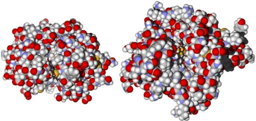 Lowest-energy docked poses of 6-hydroxydehydroiso-α-lapachone.Left: With rhodesain (PDB 2p86 [41]). Right: With TbCatB (PDB 3hhi [46]). Note the proximity and orientation of the quinone moiety with the cysteine sulfur atoms in the active sites.