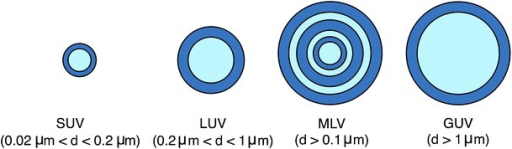 Schematic representation of the different types of liposomes, depending on their size and number of lamellae