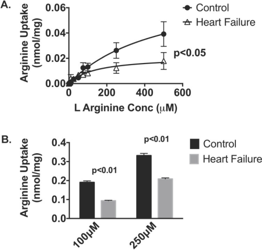 L-Arginine uptake was assessed in healthy and heart failure cardiac mitochondria from A. sheep (n = 5–7 per gp) and B. mice (n = 4 per gp) by measuring [3H]-L-arginine influx (15 mins incubation time) in the presence of varying concentrations of unlabeled L-arginine in.Data is presented as mean ± SEM.