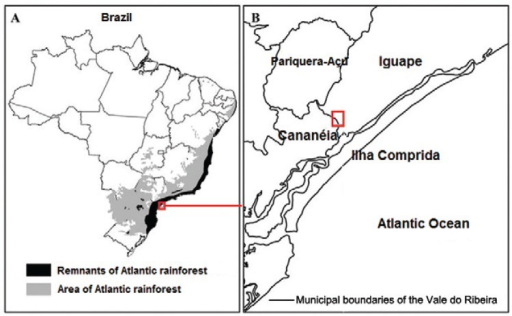 : location of collection area in the municipality of Iguape, state of SãoPaulo, Brazil, 2012.