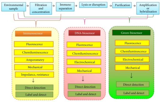 Common procedures for detection of certain water-borne pathogens in environmental matrices and progressive development of respective bionanosensors including immunosensor, DNA-based sensor, and others. Irrespectively, preprocessing steps of necessity initially require filtration and concentration, and then an immunoseparation step (e.g., immunomagnetic separation) in several types of assays.