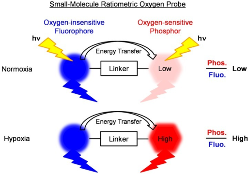 Design concept of a small-molecule ratiometric probe for sensing oxygen levels in living cells.