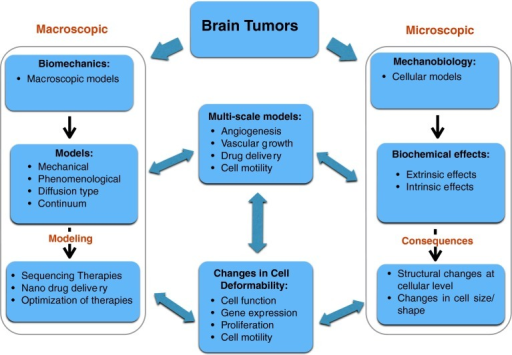 Schematic of modeling approaches to brain tumor growth and control at microscopic and macroscopic levels