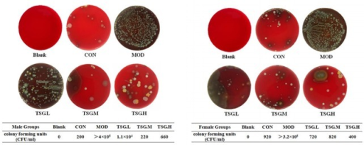 SIBO inhibition effects of TSG.Blended intestinal content sample in each group (45 mg) was cultivated at 37°C for 72 h on blood agar plates. The numbers of colonies were significantly higher in MOD group than CON group in both sexes. TSG treatment reduced the numbers of colonies in a dose-dependent manner. In the meantime, hemolysis extent was also alleviated after TSG treatment. Colony counts (CFU/mL) of each sample were listed below.