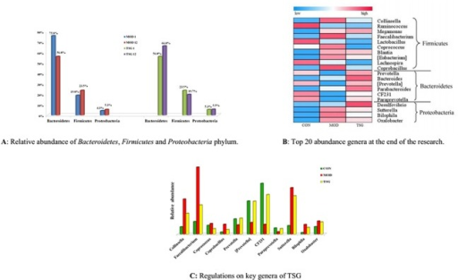 TSG and intestinal microbial balance regulation.(A) Relative abundance of Bacteroidetes, Firmicutes and Proteobacteria phylum. One fecal sample from each group in the 1st and 12nd week was chosen for pyrosequencing of V4 regions of 16S rDNA, respectively. Blue bars and red bars represented the relative phylum abundance of male MOD group in the 1st and 12nd week, respectively. Green bars and purple bars represented the relative phylum abundance of male TSG.M group in the 1st and 12nd week, respectively. (B) Top 20 abundance genera at the end of the research. Heat map was showing the abundance of top 20 abundance genera in male CON, MOD and TSG.M group. Genera in Bacteroidetes and Proteobacteria phylum had relative higher abundance, while genera in Firmicutes had relative lower abundance after TSG treatment. (C) Regulations on key genera of TSG. Green, red and yellow bars displayed specific genera abundance in male CON, MOD and TSG.M group at the end of the research.