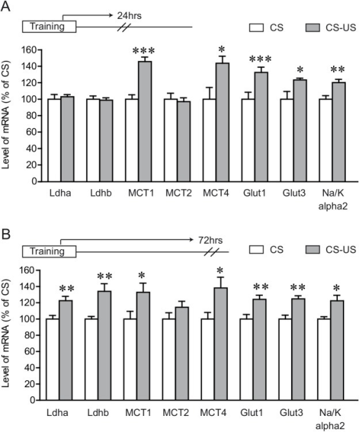 IA training results in enhanced and prolonged expression of ANLS related genes.Dorsal hippocampal tissue was collected 24 hours following inhibitory avoidance training (A) or 72 hours following inhibitory avoidance testing (B) and mRNA expression levels for the ANLS related genes were assessed by quantitative Q-PCR. Results are expressed as percentage of control values (CS group) and are means ± SEM. Data were statistically analyzed using two-tailed Student's t test, * P < 0.05, ** P < 0.01, *** P < 0.001 vs CS group, n = 8/group for condition A and 7/group for condition B.