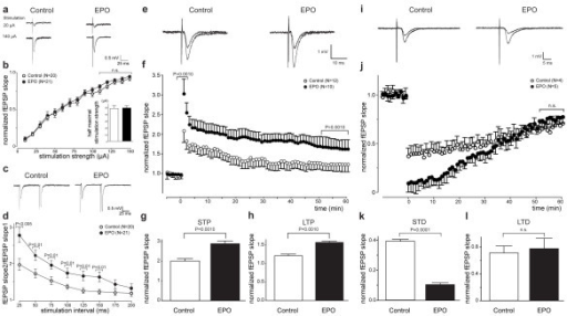Neurophysiology of acute hippocampal slices: Extracellular recordings. (a-b) Input-output relation is not altered at Schaffer collateral-CA1 synapses in EPO-treated mice. (a) Sample recordings at 50% of maximal response (average of four traces) are shown for control and EPO-treated mice. (b) Input-output curve as a measure of baseline excitatory synaptic transmission: fEPSP slope, plotted against the stimulation strength, is not altered in EPO-treated mice compared to control (P = 0.3094). Inset: Half maximal stimulation strengths are not significantly different. (c-d) Paired-pulse facilitation is enhanced in EPO-treated mice. (c) Sample traces are presented. (d) Paired-pulse ratio (fEPSP slope for the second stimulus/fEPSP slope for the first stimulus) at inter-stimulus intervals of 25–150 ms is significantly greater in EPO-treated mice. (e-h) Increased LTP at Schaffer collateral CA1 synapses in EPO-treated mice. (e) Sample traces of responses are shown before and after high frequency stimulation (HFS; 3 × 100 Hz for 1 s each, 20 s interval). (f) Long-term potentiation elicited by HFS: Slopes of fEPSP are normalized to baseline and plotted against time. Time-point 0 represents application of HFS. (g) Magnitude of STP, determined as maximal responses within 1 min after HFS, is significantly greater in EPO-treated mice. (h) Magnitude of LTP, determined as responses between 50 and 60 min after HFS, is significantly greater in EPO-treated mice. (i-l) Increased STD at Schaffer collateral-CA1 synapses in EPO-treated mice. (i) Sample traces of responses are shown before and after low frequency stimulation (LFS; 1 Hz for 900 stimulations). (j) Long-term depression elicited by LFS: Slopes of fEPSP are normalized to baseline and plotted against time. Time 0 represents application of LFS. (k) Magnitude of STD, determined as maximal responses within 1 min after LFS, is significantly greater in EPO-treated mice. (l) Magnitude of LTD, determined as responses between 50 and 60 min after LFS, is not significantly changed in EPO-treated mice (P = 0.0869).