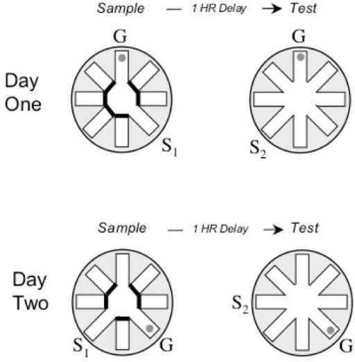 Diagram of the delayed match to sample radial water maz open i diagram of the delayed match to sample radial water maze task including sample left ccuart Choice Image