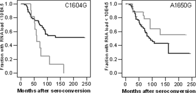 Survival analysis for C1604G and A1650G in DU of the ACS.Kaplan Meier analysis for time in months from seroconversion to viral RNA load above 104.5 copies per ml plasma in DU of the ACS based on the C1604G genotype (left panel) or A1650G genotype (right panel). Black lines indicate individuals homozygous for the major allele (left panel: 1604CC; right panel: 1650AA); Gray lines indicate individuals heterozygous for the minor allele (left panel: 1604CG; right panel: 1650AG).