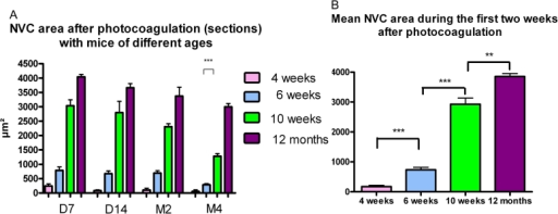 Evolution of the CNV reaction with aging. A: This reaction reaches its peak during the first two weeks after photocoagulation (PC), diminishes progressively after, and is still present on month 4. Choroidal neovascularization is rare and difficult to quantify in 4-week-old mice (group I). It is more prominent in 10–12-week-old mice and 1-year-old mice. It diminishes more markedly in young adult mice after two months. On month 4, the difference is statistically significant between young adult and old mice. A p<0.0001 was considered significant. B: The mean CNV area during the first two weeks after PC is significantly larger in old mice in comparison to young adult mice according to t-test.